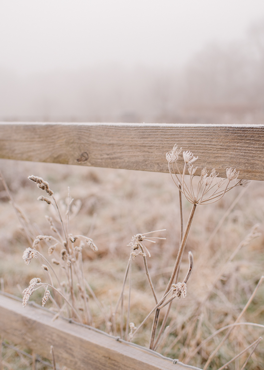 winter landscape by Agi Lebiedz
